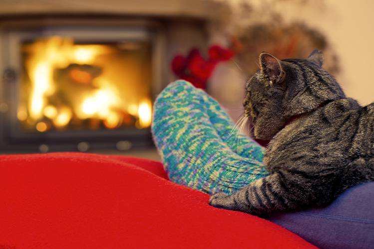 А ваша кошка готова к зиме?