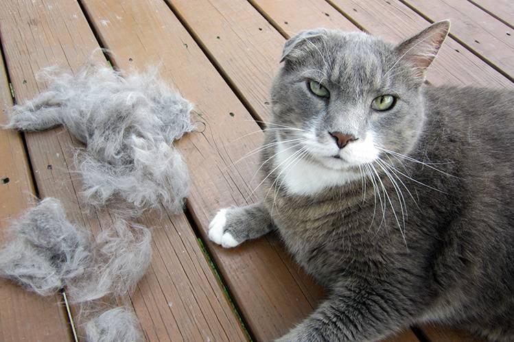 Безоар у кошек