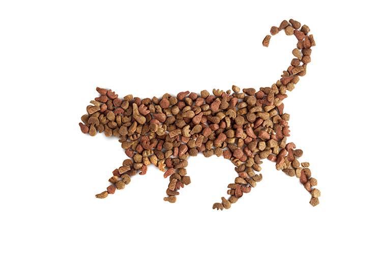 Чем кормить пожилую кошку?