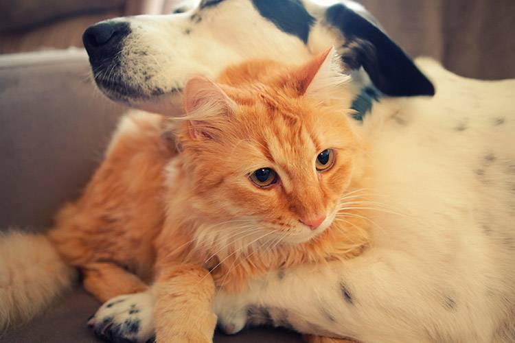 Чтобы кошка и собака жили душа в душу