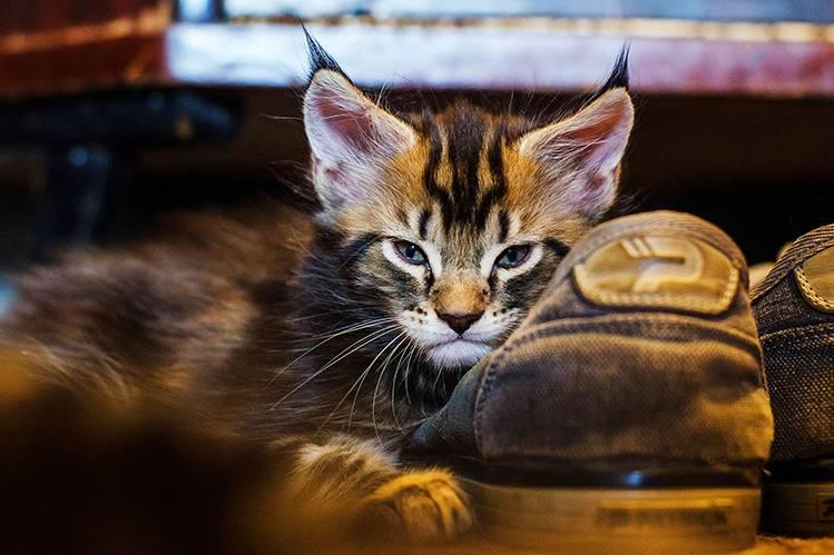 Дегельминтизация котят и кошек