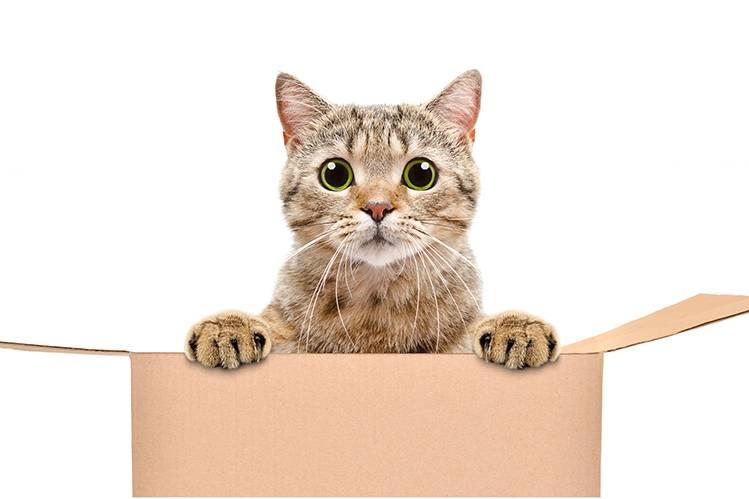 Где приобрести котенка?