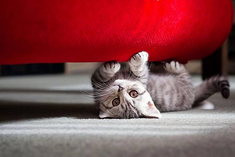 Как отучить кошку драть обои и мебель?