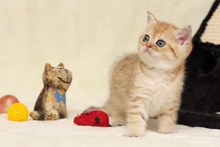 Как подготовить дом к появлению котенка?