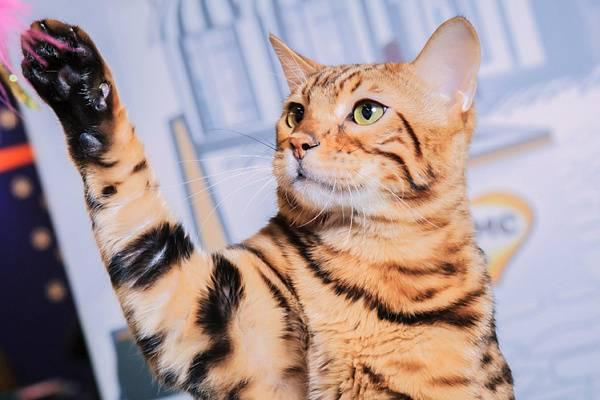 Как подобрать лакомство для стерилизованных кошек?