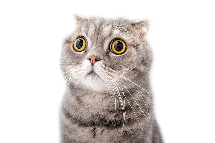 Как подружить кошку с котенком?