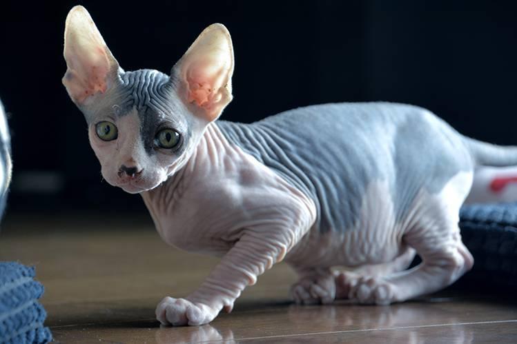 Как прикольно назвать котенка?