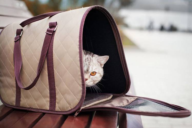 Как приучить кошку к переноске?