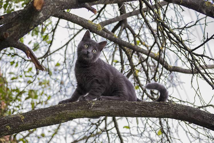 Как снять кота с дерева?
