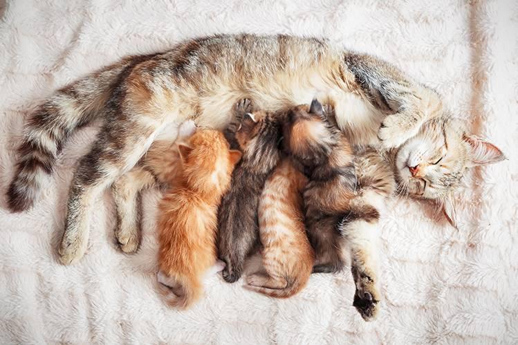 Как ухаживать за новорожденным котенком?