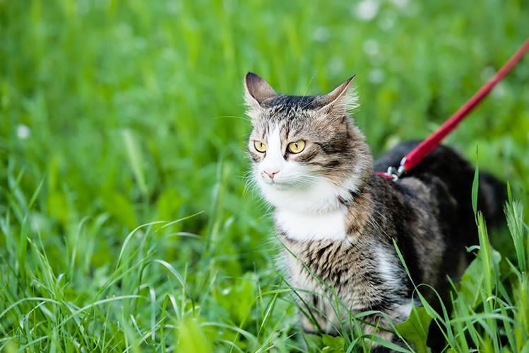 Как защитить кошку от клещей?