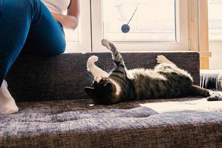 Какие бывают игрушки для кошек?