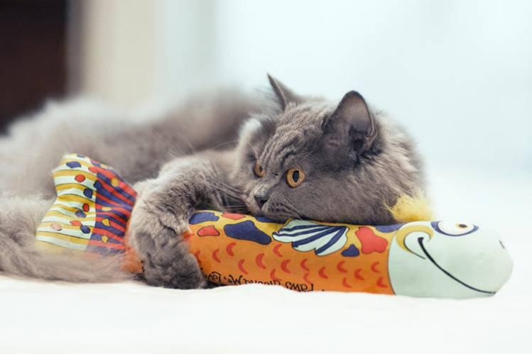 Какие игрушки нужны кошке?