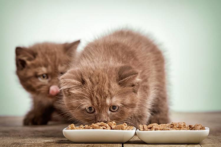 Какой корм выбрать для котенка?