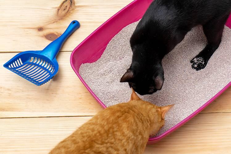Какой наполнитель для кошачьего туалета выбрать?