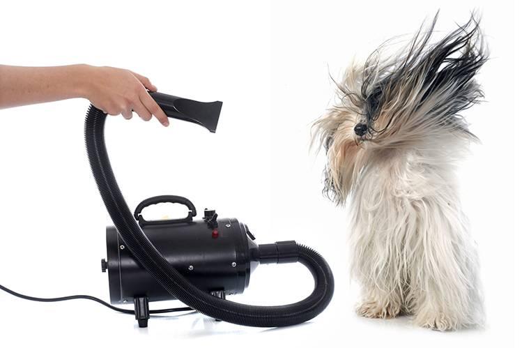 Какой шампунь выбрать для собаки и кошки?