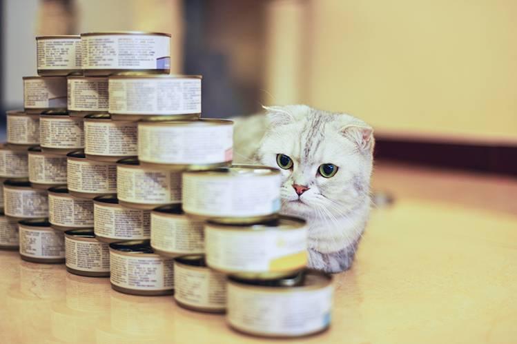 Какой влажный корм для кошек лучше?