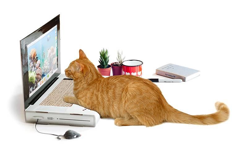 Когтеточки для кошек: чтобы мебель и обои не пострадали