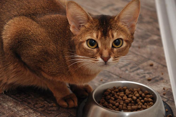 Кормление кормящей кошки