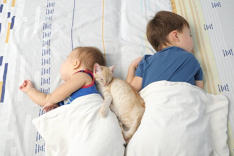 Кошка и ребенок в одном доме