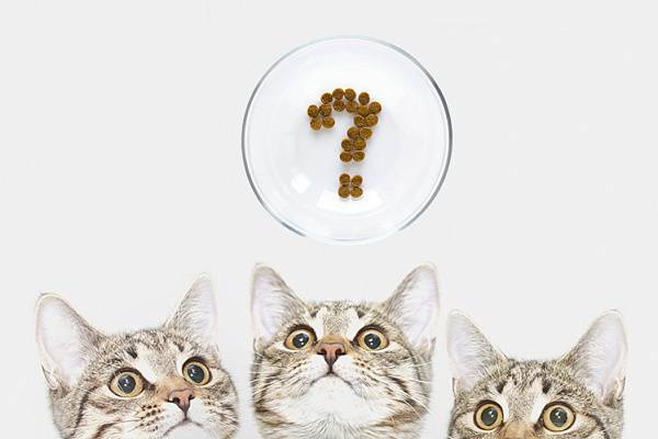 Кошка отказывается от еды: что делать?