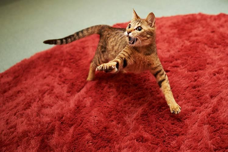 Кошка прыгает на лицо и кусается!