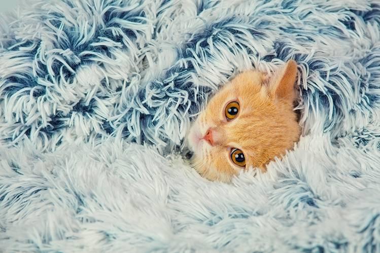Кошке холодно: что делать?
