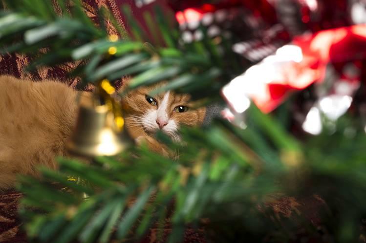 Кошки против елок!