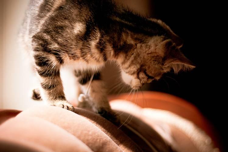 Линька у котят