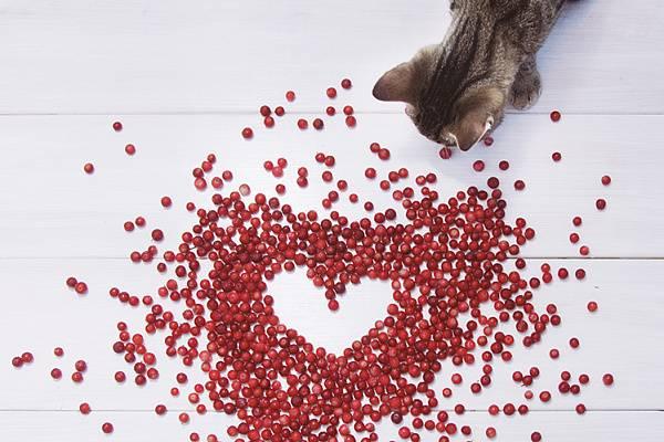 Можно ли котятам фрукты и ягоды?