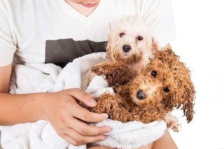 Нужен ли собакам и кошкам кондиционер?