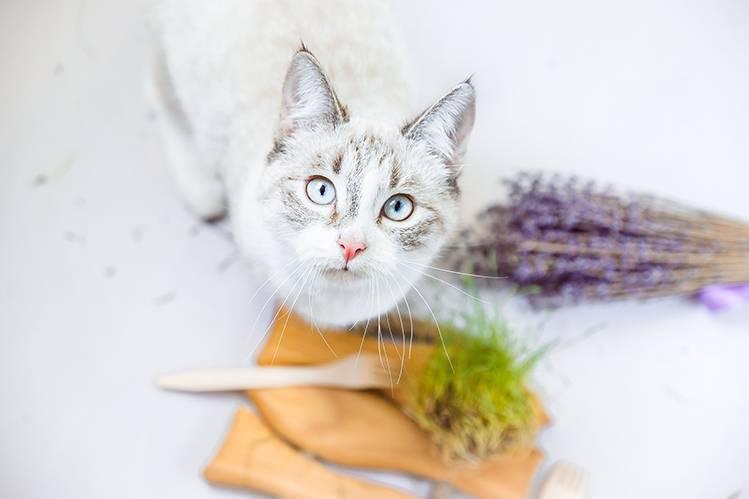 Нужны ли кошкам злаки?