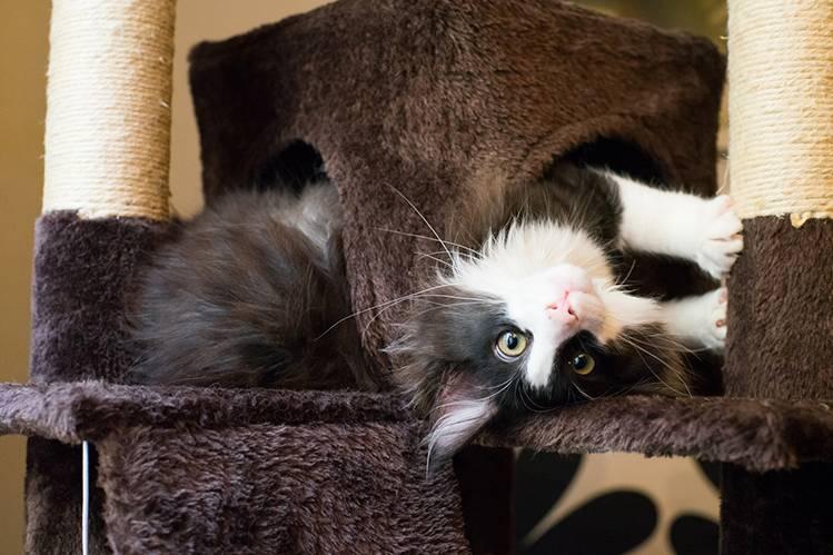 Откуда у домашней кошки блохи?