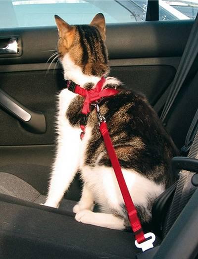 Перевозка кошек в автомобиле