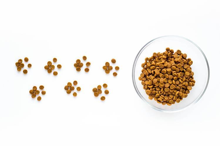 Пищевая аллергия и пищевая непереносимость у кошек