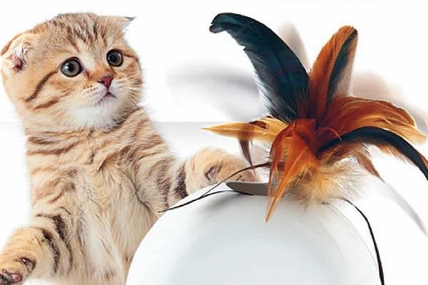 Почему интерактивная игрушка - это лучший подарок для кошки?