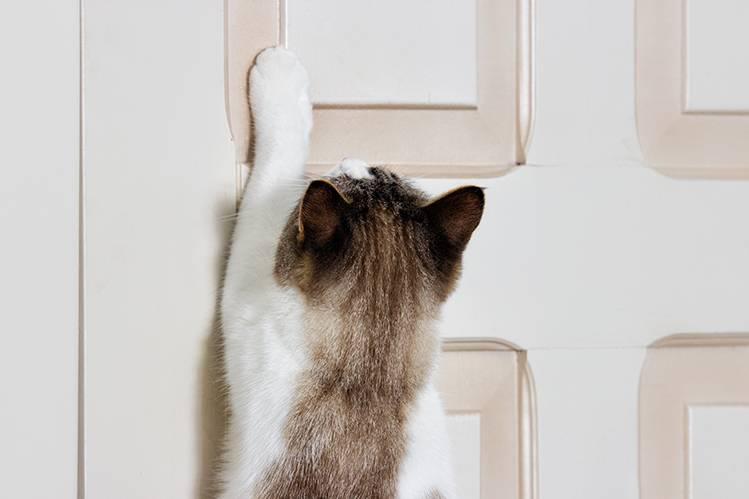 Почему кот кричит по ночам?