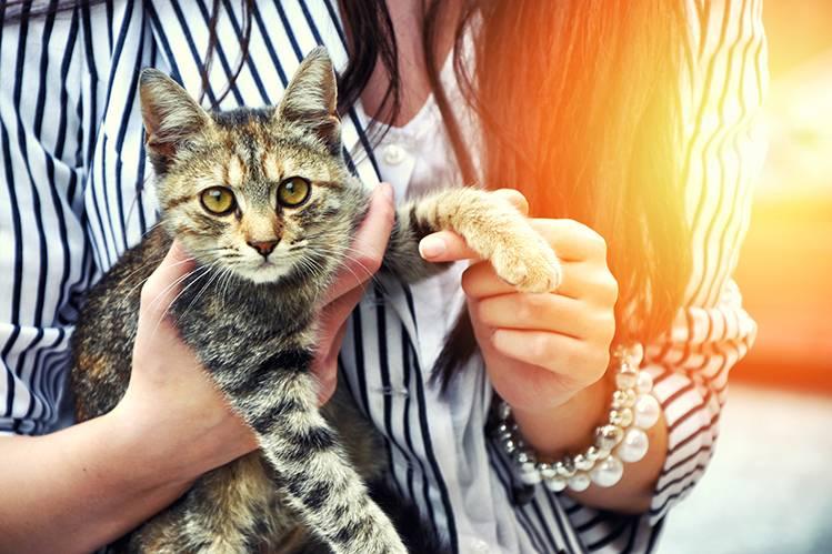 Подобрали котенка с улицы: план действий
