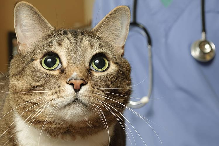 Правила вакцинации кошек
