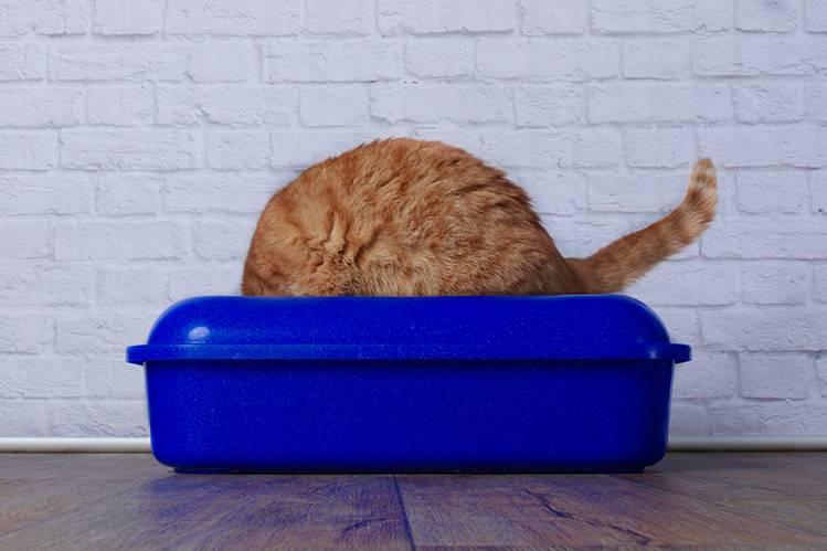 Праздники без проблем, Или расстройства пищеварения у кошек