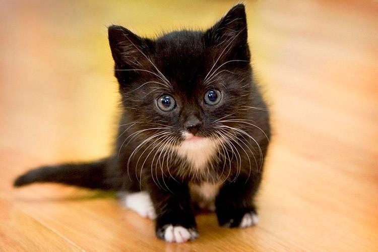 Рекомендации по кормлению котят