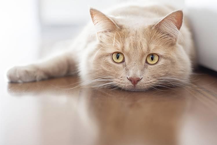 Старение кошки