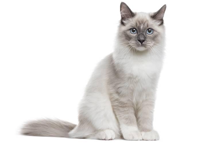 Топ-5 белых кошек