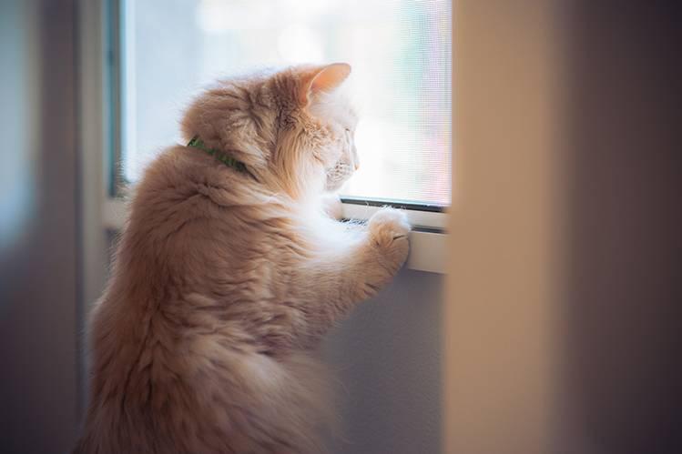 Весенние опасности для кошек и собак